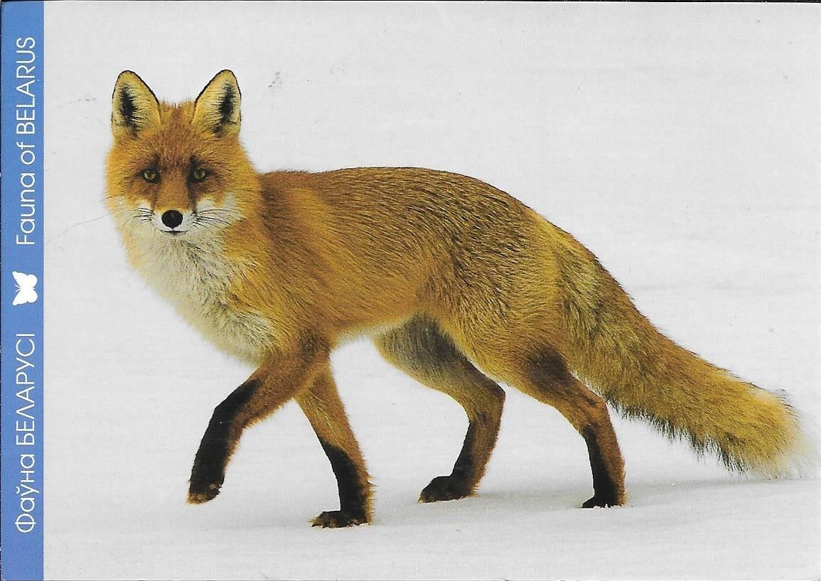 Belarus Fauna of
