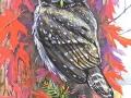 Belarus Owls of